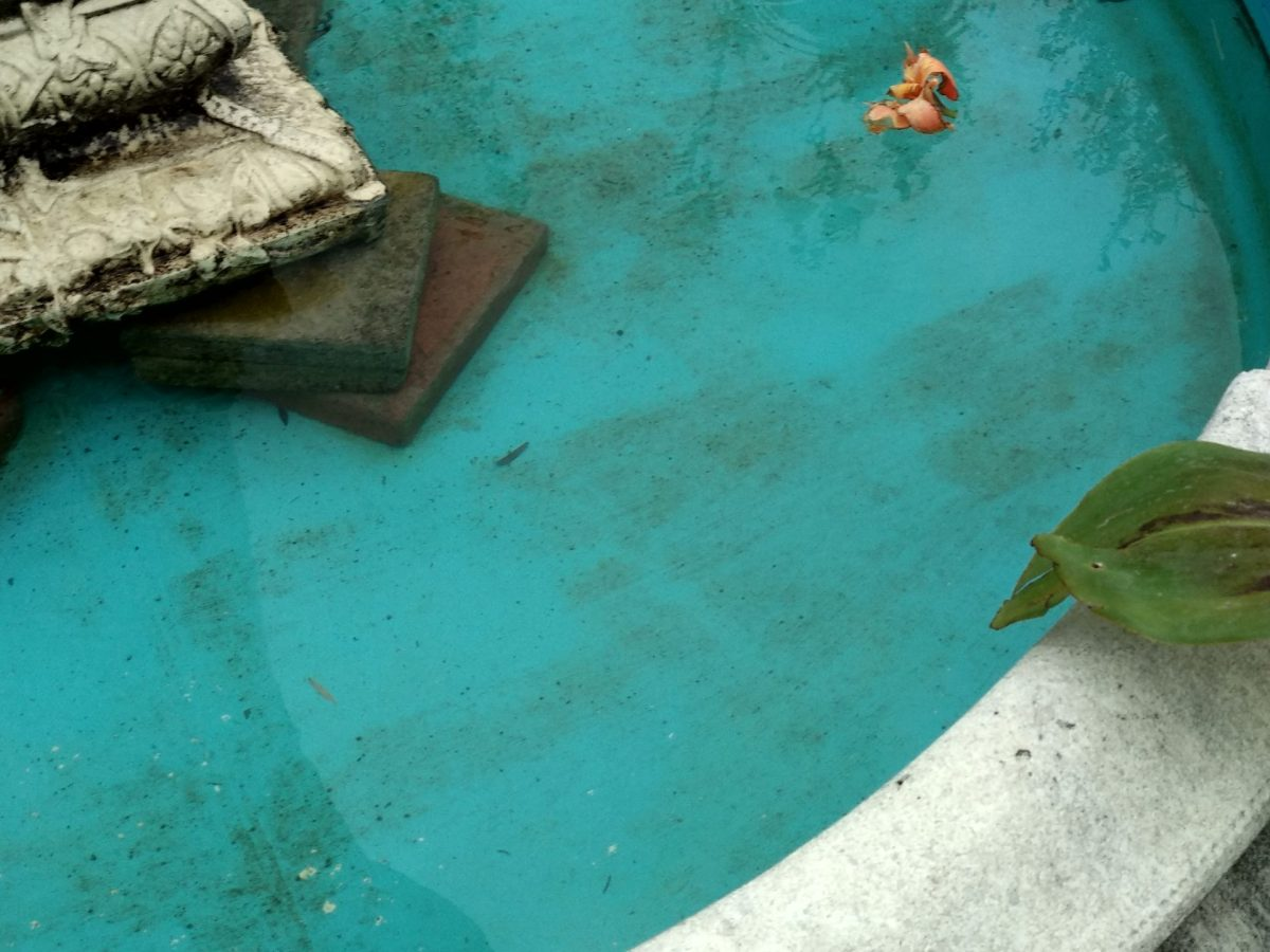 The Leaf in the Concrete Pool