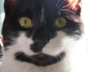 Tilly the kitten